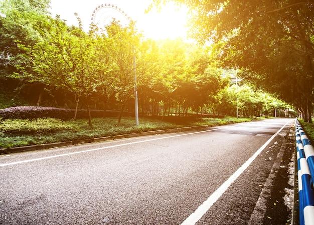Forêt avec une route