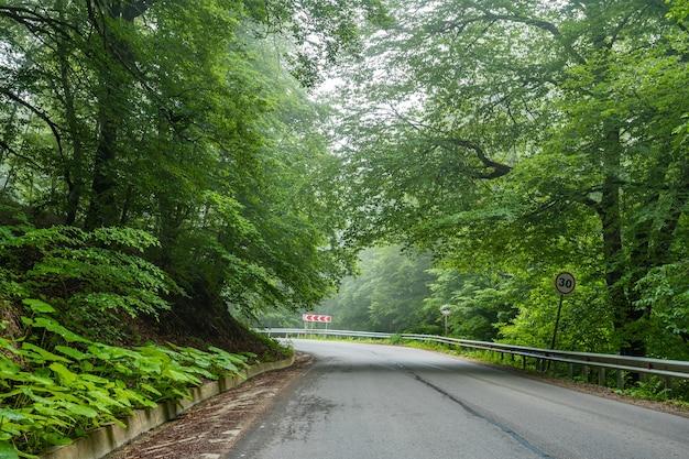 Forêt de sabaduri en été, un bel endroit au nord de tbilissi