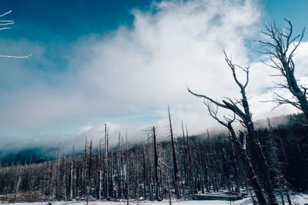 Forêt sans feuilles