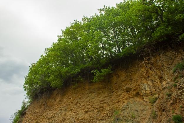 La forêt se termine par une falaise