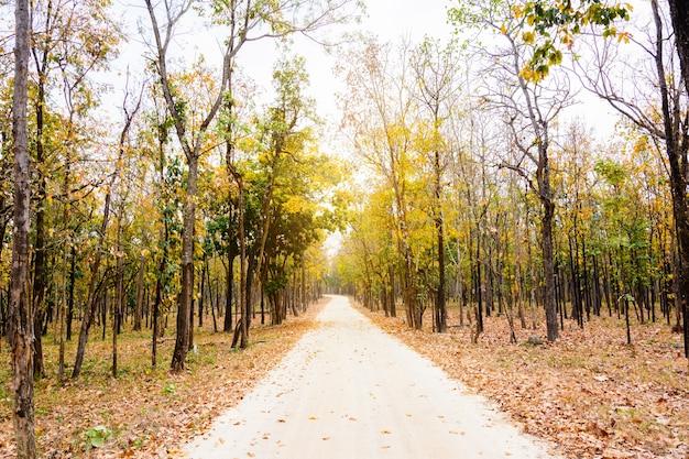Forêt sèche le long de la route du parc