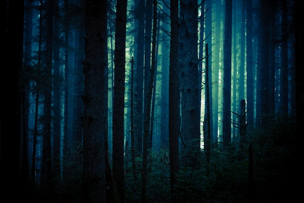 Forêt sombre et effrayante