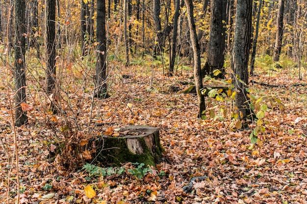 Forêt souche feuilles texture fond bakdrop
