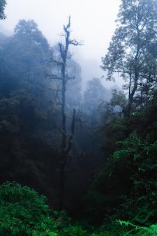Forêt tropicale asiatique. jungle brumeuse au népal pendant la saison des pluies