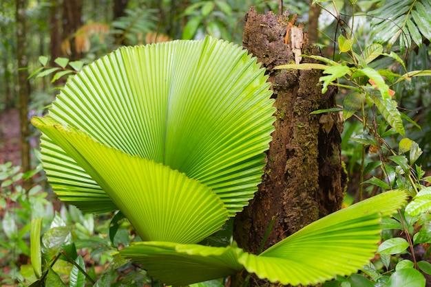 Forêt tropicale de bornéo malaisie bornéo