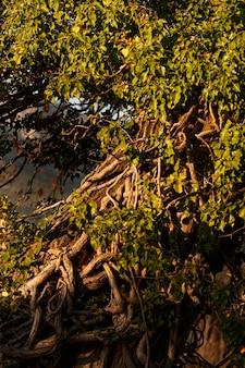 Forêt tropicale capturée à la lumière du jour