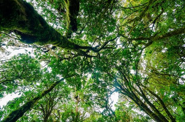 Forêt tropicale de doi inthanon forêt de nuages de chiang mai, thaïlande
