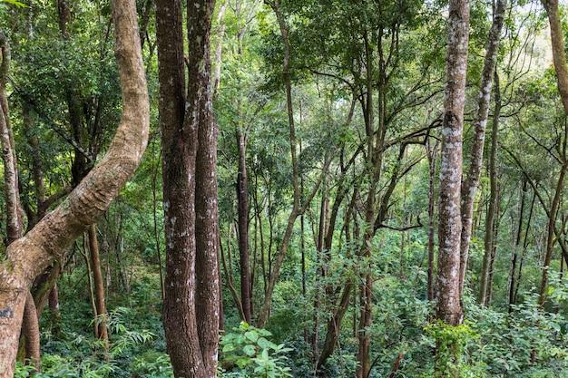 Forêt tropicale du nord de la thaïlande.
