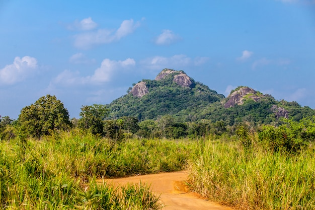 Forêt tropicale du sri lanka