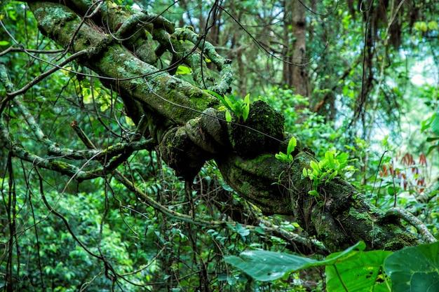 Forêt tropicale humide en thaïlande