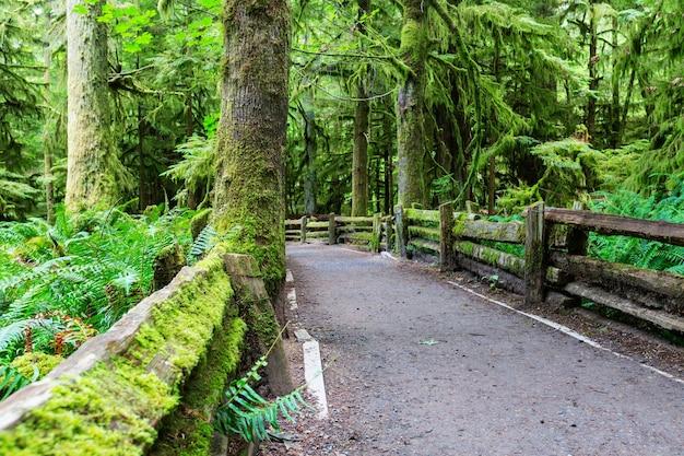 Forêt tropicale sur l'île de vancouver, colombie-britannique, canada