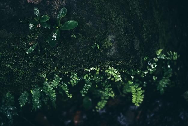 Forêt tropicale de la jungle tropicale, feuillage, sauvage, pluie, paysage sauvage exotique, végétation de palmiers luxuriante et brouillard, tropiques écologiques dans la forêt tropicale avec lumière de croissance, fond d'écran de verdure pittoresque