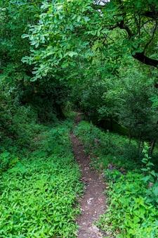 Forêt verte et le chemin à savsat, artvin - turquie