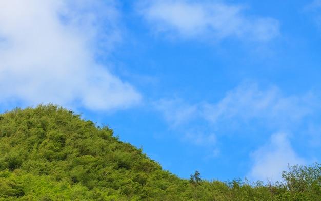 Forêt verte et ciel bleu avec fond de nuage blanc