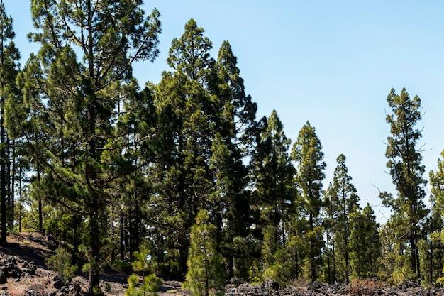 Forêt verte avec ciel dégagé