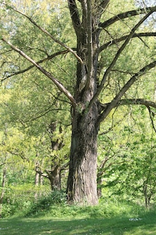Forêt verte avec de grands arbres pendant la journée