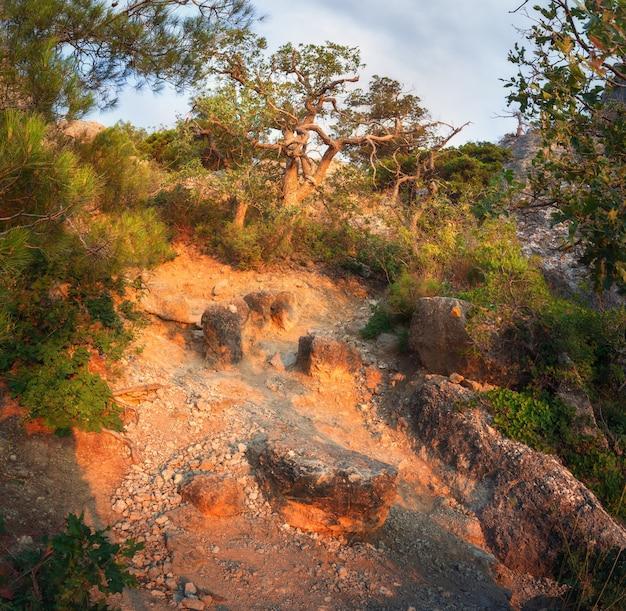 Forêt verte avec sentier dans les montagnes au lever du soleil.