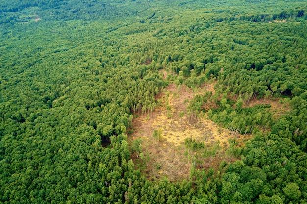 Forêt verte, vue aérienne. paysage naturel de pins, vue à vol d'oiseau. beau fond de forêt d'été