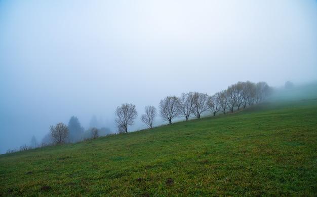Forêts denses colorées dans les montagnes vertes chaudes des carpates couvertes d'un épais brouillard gris