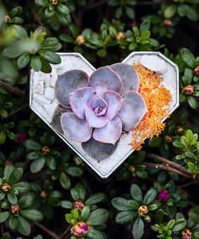 Forme de coeur de florarium en verre avec plante succulente à l'intérieur parmi les buissons fleuris.