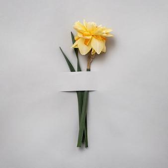 Forme fantaisie jonquille jaune sur fond gris. le concept du printemps et des cartes postales pour les félicitations pour un anniversaire ou des vacances.