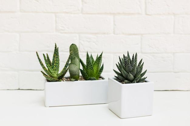Formes en céramique avec des plantes. divers plantes succulentes, cactus, plantes décoratives pour la maison