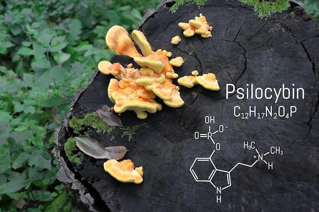 Formule chimique de la psilocybine sur un champignon tableau noir, gros plan champignon psilocybine, drogue psychédélique