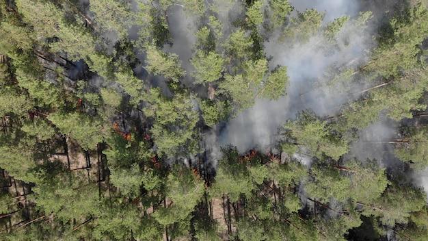 Fort feu de forêt dans une forêt de conifères. incendies aux états-unis en 2020