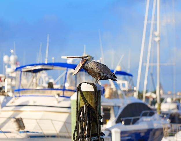 Fort lauderdale pelican oiseau dans la marina en floride