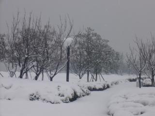 Fortes chutes de neige dans les pins, les bois