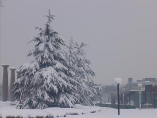 Fortes chutes de neige dans les pins, les pins
