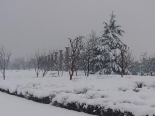 Fortes chutes de neige dans les pins, les saisons, la neige