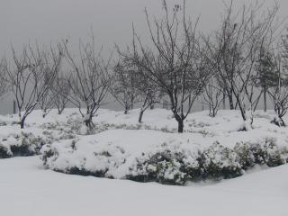 Fortes chutes de neige dans les pins, les saisons