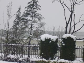 Fortes chutes de neige dans les pins