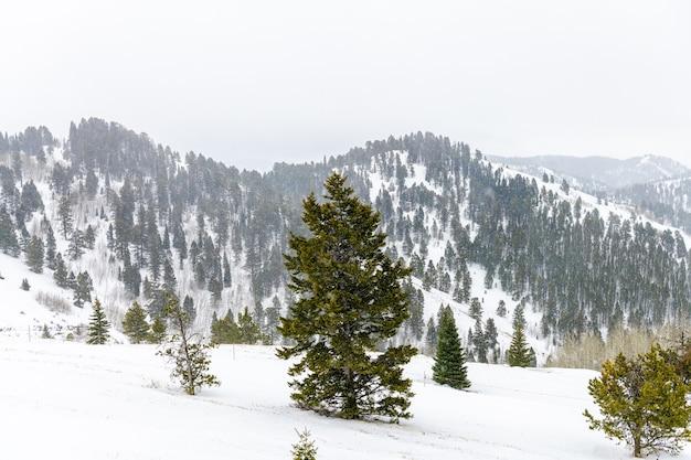 De fortes chutes de neige à l'heure d'hiver dans les montagnes de jackson hole, wyoming, usa
