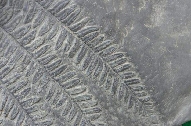 Fossiles de fougère