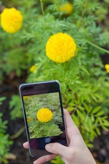 Fotografía de flor amarilla