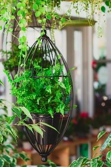 Fougère dans des jardinières suspendues