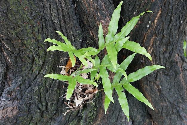 La fougère est née sur la branche d'un grand arbre
