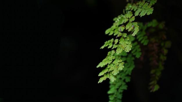 Une fougère fait partie d'un groupe de plantes vasculaires