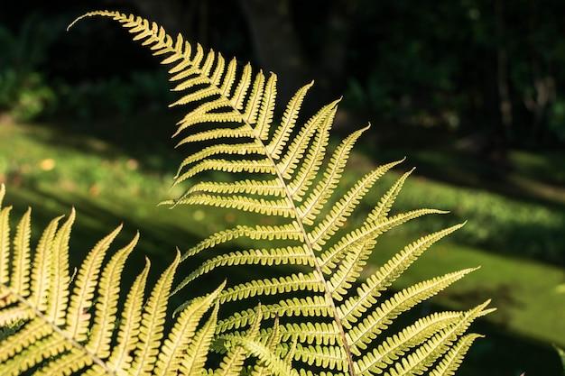 Fougère feuilles de fond. paysage naturel dans un paysage de forêt éclaircie.