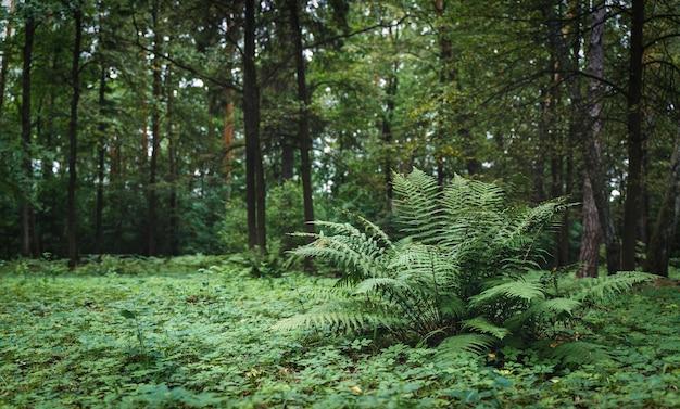 Fougère en fond de jungle tropicale feuilles de fougère avec un motif végétal plante naturelle fond tropical...