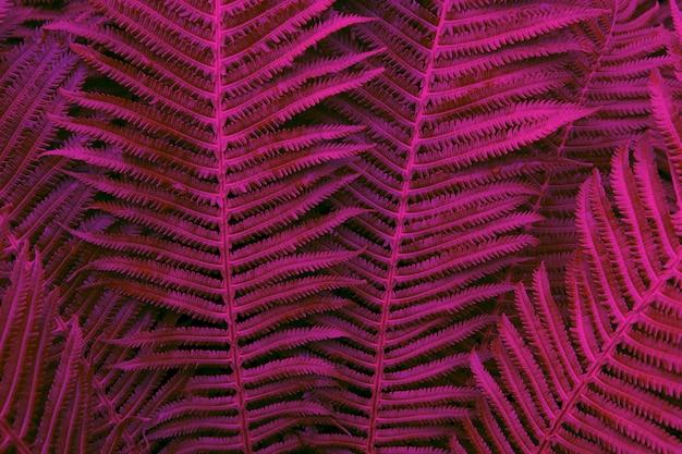 Fougère rougeoyante dans des couleurs néon à la mode