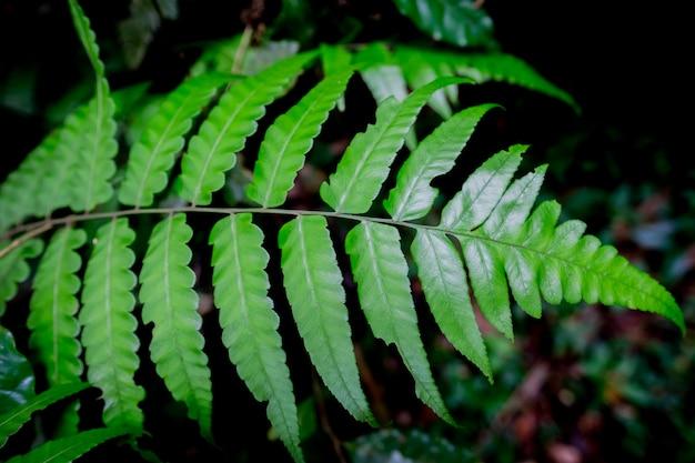 Fougère verte naturelle dans la forêt