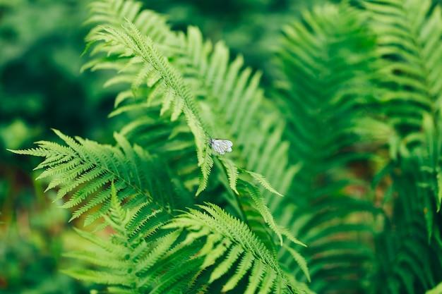 Fougères beautyful feuilles feuillage vert fougère florale naturelle au soleil
