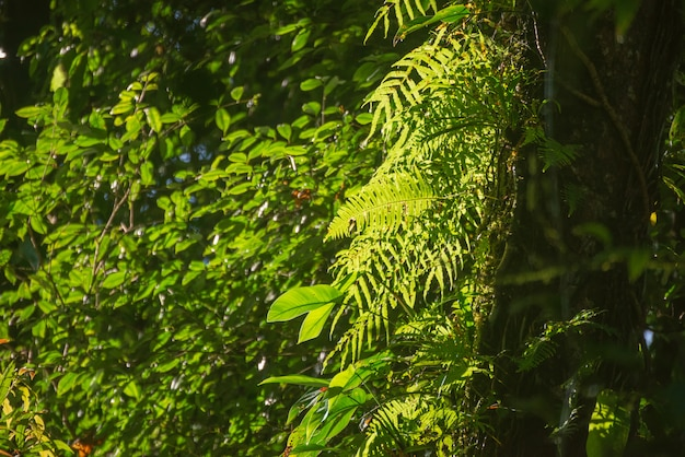 Fougères dans la forêt
