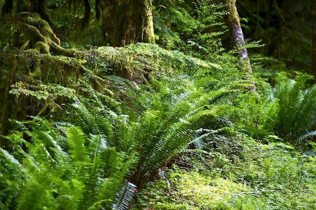 Fougères forêts tropicales