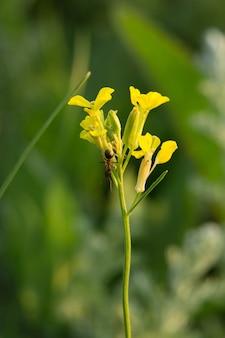 Fourmi sur une fleur de printemps jaune
