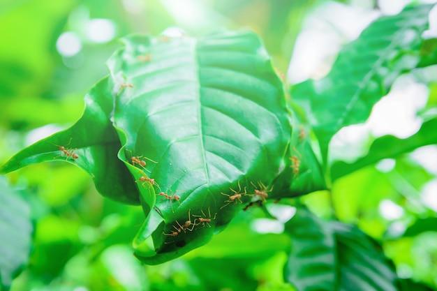 Les fourmis construisent des nids.