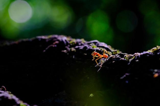 Les fourmis font partie des beautés de la nature au coucher du soleil